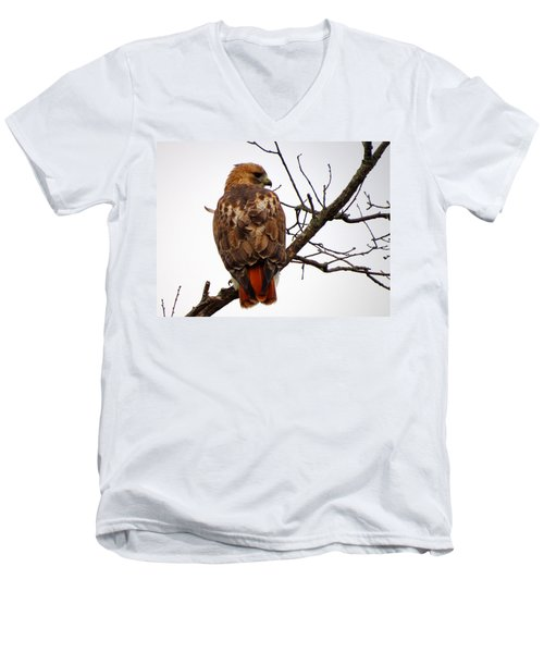 Red Tail Hawk In Winter Men's V-Neck T-Shirt