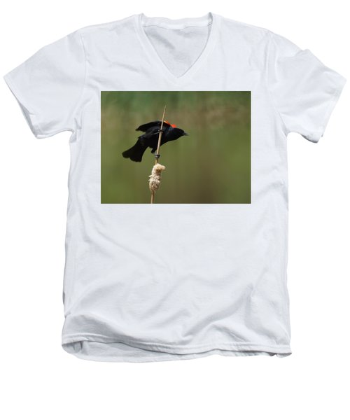 Red Winged Blackbird 3 Men's V-Neck T-Shirt