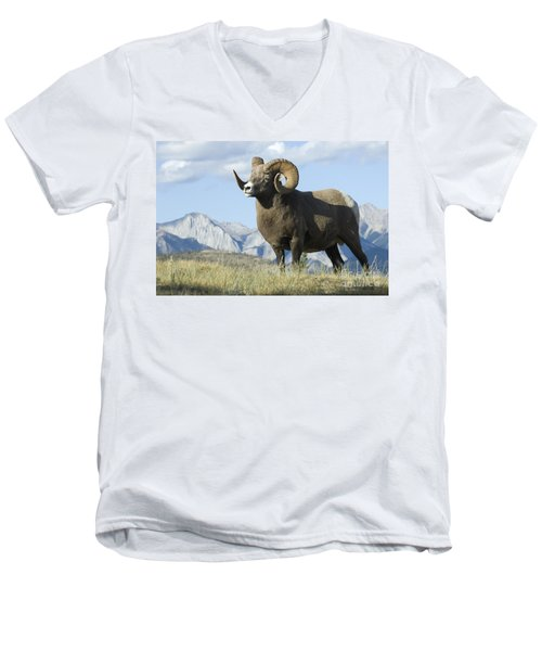 Rocky Mountain Big Horn Sheep Men's V-Neck T-Shirt