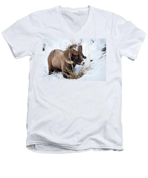 Rocky Mountain Bighorn Sheep Men's V-Neck T-Shirt