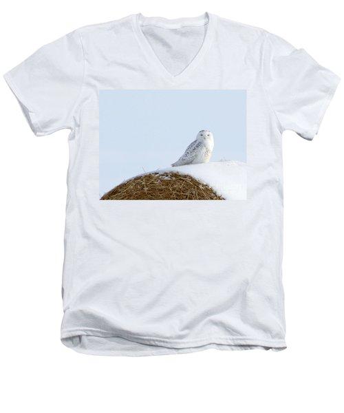 Snowy Owl Men's V-Neck T-Shirt by Alyce Taylor