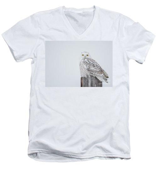 Snowy Owl Perfection Men's V-Neck T-Shirt
