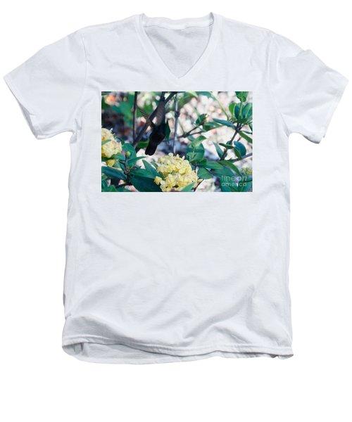 St. Lucian Hummingbird Men's V-Neck T-Shirt