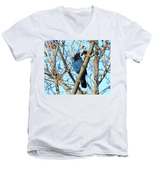 Steller's Jay In Winter Men's V-Neck T-Shirt
