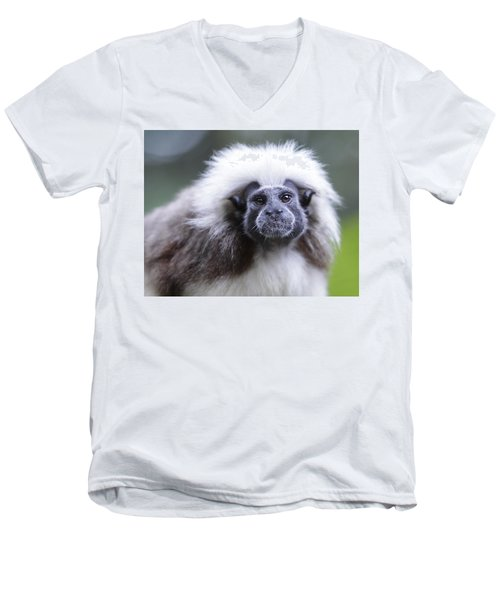 Men's V-Neck T-Shirt featuring the photograph Tamarins Face by Shoal Hollingsworth