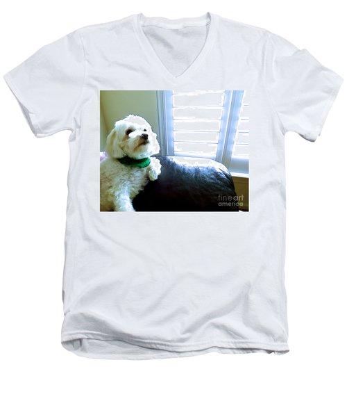 Teddy Men's V-Neck T-Shirt