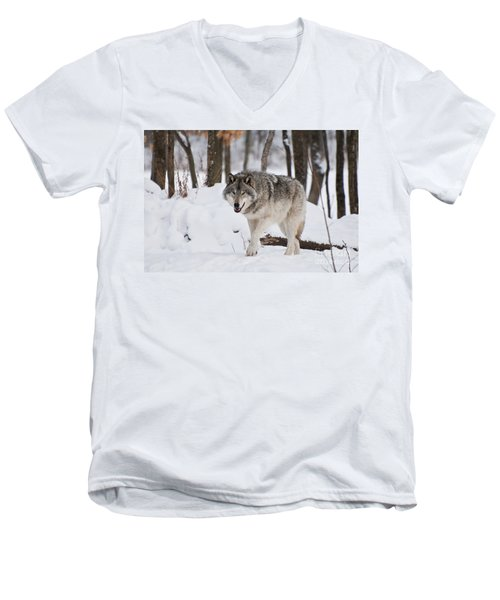 Men's V-Neck T-Shirt featuring the photograph Timber Wolf In Winter Forest by Wolves Only