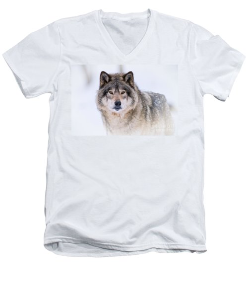 Timber Wolf Pictures 256 Men's V-Neck T-Shirt