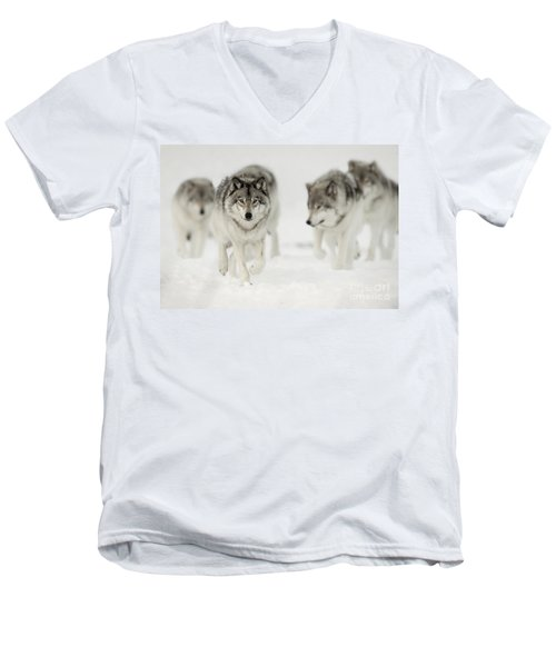Timber Wolf Pictures 65 Men's V-Neck T-Shirt