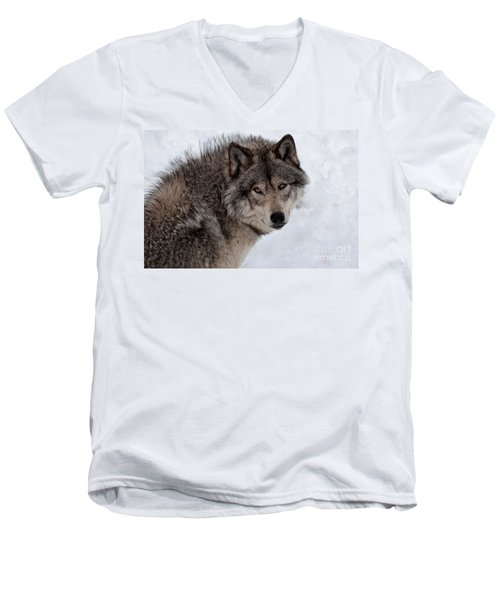 Men's V-Neck T-Shirt featuring the photograph Timberwolf At Rest by Bianca Nadeau