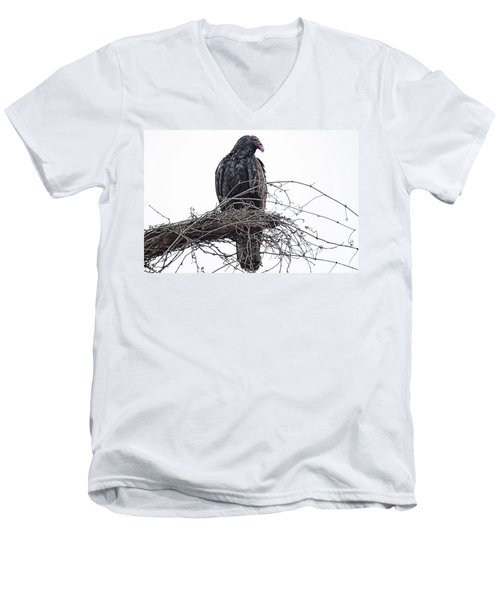 Turkey Vulture Men's V-Neck T-Shirt by Douglas Barnard