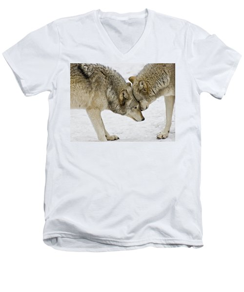 Men's V-Neck T-Shirt featuring the photograph Two Wolves In  A Staredown by Gary Slawsky