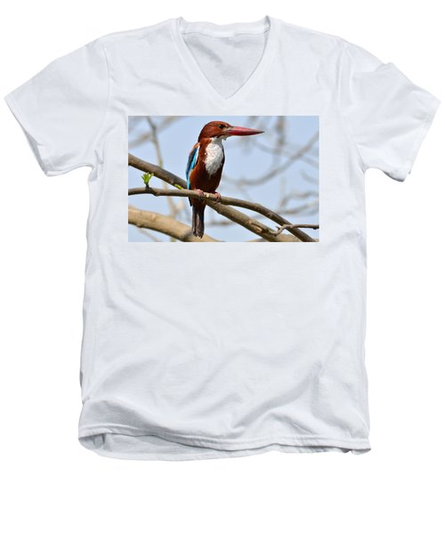 White Breasted Kingfisher Men's V-Neck T-Shirt