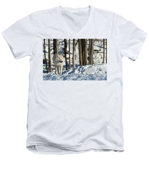 Men's V-Neck T-Shirt featuring the photograph Winter Arctic Wolf by Wolves Only