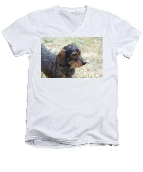Wire Haired Daschund Men's V-Neck T-Shirt