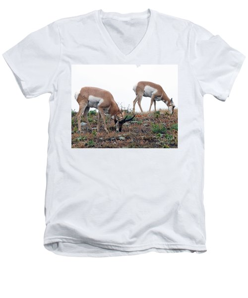 Antelopes Grazing Men's V-Neck T-Shirt