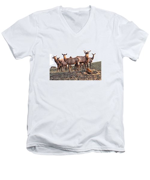 Early Morning Herd Men's V-Neck T-Shirt by CR  Courson