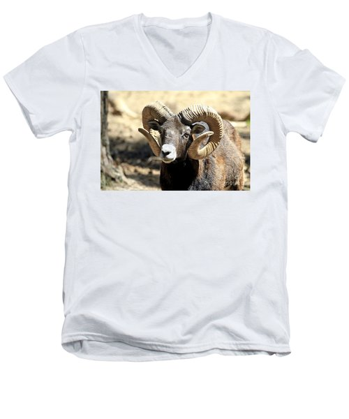 European Big Horn - Mouflon Ram Men's V-Neck T-Shirt by Teresa Zieba