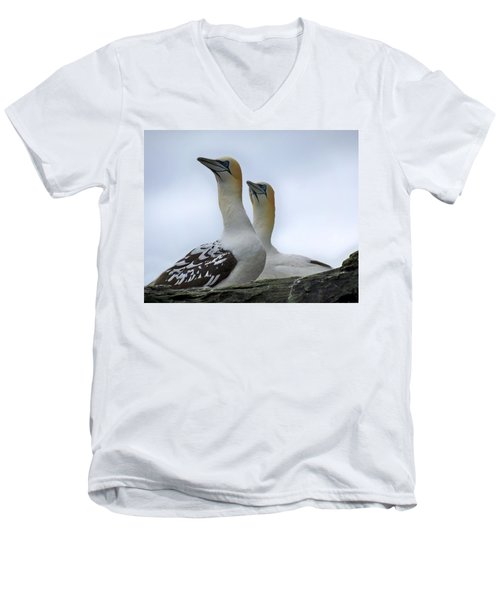 Gannets Men's V-Neck T-Shirt by Lynn Bolt