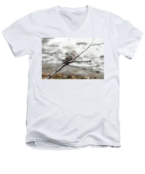 Men's V-Neck T-Shirt featuring the photograph Good Morning Dove by Elizabeth Winter