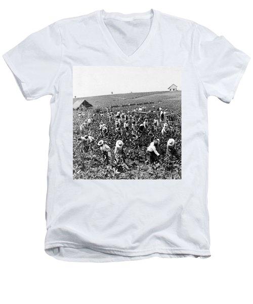 Tobacco Field In Montpelier - Jamaica - C 1900 Men's V-Neck T-Shirt