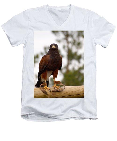 Harris's Hawk Men's V-Neck T-Shirt
