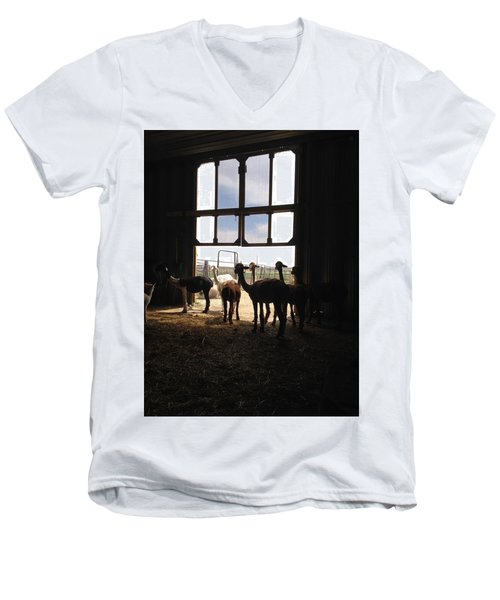Alpaca  Men's V-Neck T-Shirt