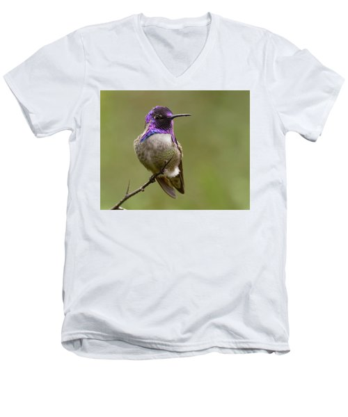 Men's V-Neck T-Shirt featuring the photograph Costa's Hummingbird, Solano County California by Doug Herr