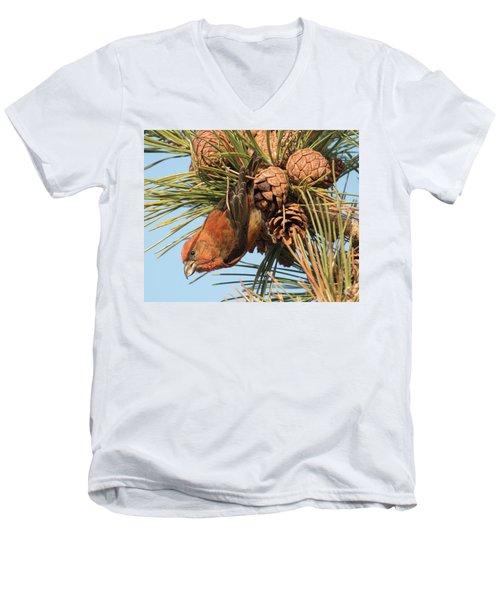 Crossbill Men's V-Neck T-Shirt