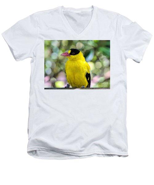 Oriole Wonder Men's V-Neck T-Shirt