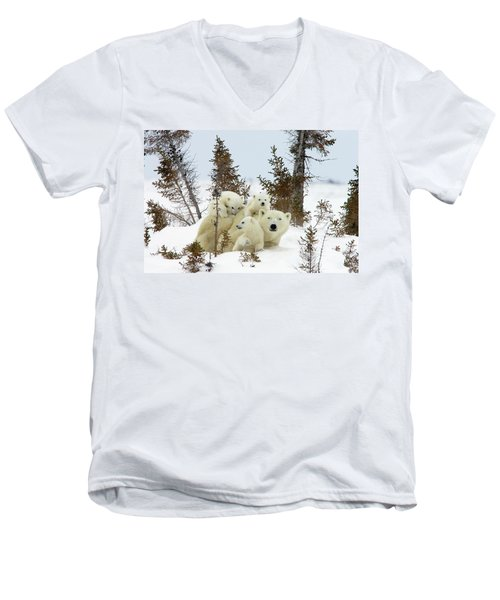 Polar Bear Ursus Maritimus Trio Men's V-Neck T-Shirt