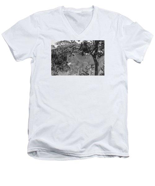 Wildlife Men's V-Neck T-Shirt by Daniel Precht