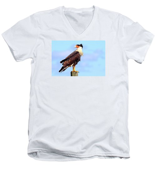 Crested Caracara Men's V-Neck T-Shirt