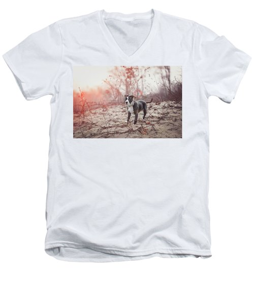 Men's V-Neck T-Shirt featuring the photograph American Pitbull  by Peter Lakomy