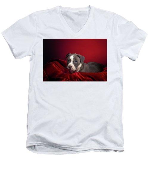 American Pitbull Puppy Men's V-Neck T-Shirt by Peter Lakomy