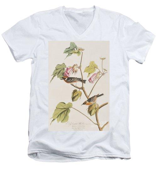 Bay Breasted Warbler Men's V-Neck T-Shirt by John James Audubon
