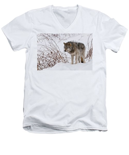 Men's V-Neck T-Shirt featuring the photograph Timber Wolf In Winter by Michael Cummings