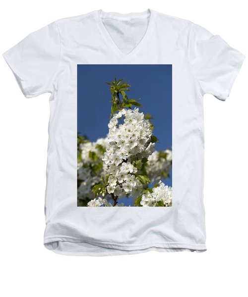 A Cluster Of Cherry Flowers Blossoming In The Springtime Men's V-Neck T-Shirt