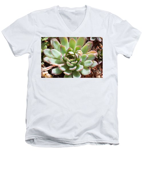 Men's V-Neck T-Shirt featuring the photograph A Young Succulent Plant by Catherine Lau