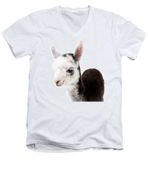 Men's V-Neck T-Shirt featuring the photograph Adorable Baby Alpaca Cuteness by TC Morgan