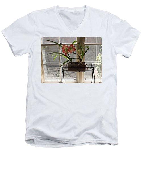 Amaryllis And Window Men's V-Neck T-Shirt by Nancy Kane Chapman