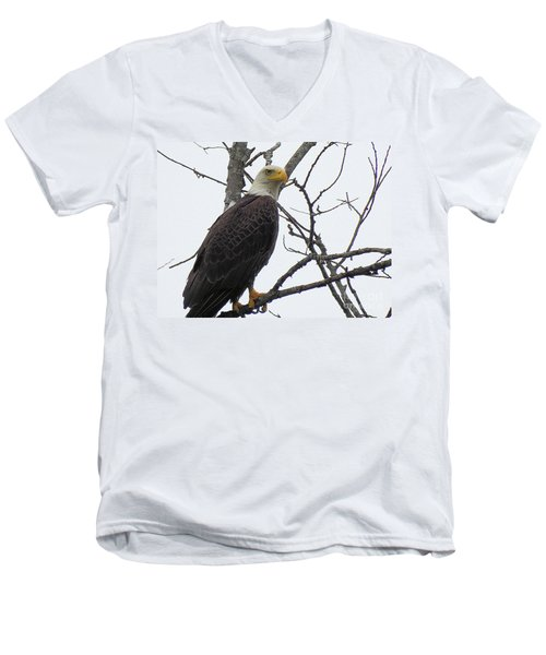 American Bald Eagle Pictures Men's V-Neck T-Shirt by Scott Cameron
