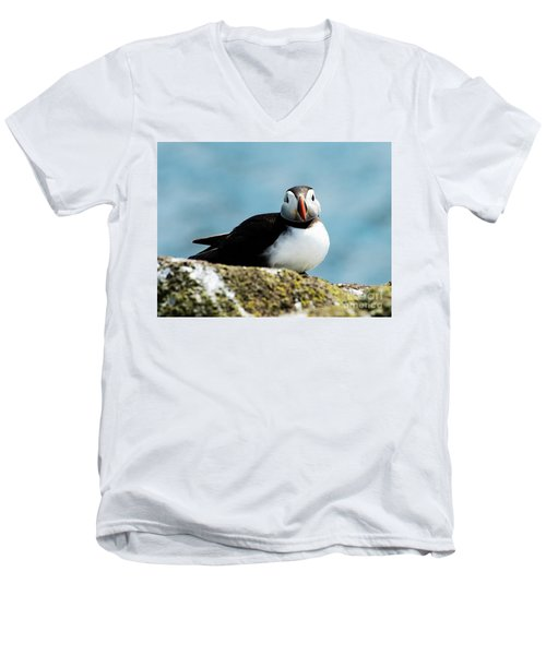 An Atlantic Puffin Men's V-Neck T-Shirt by MaryJane Armstrong