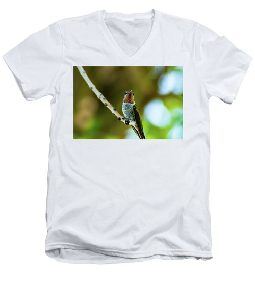 Anna's Hummingbird Men's V-Neck T-Shirt