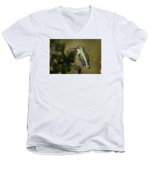 Anna's Hummingbird Men's V-Neck T-Shirt