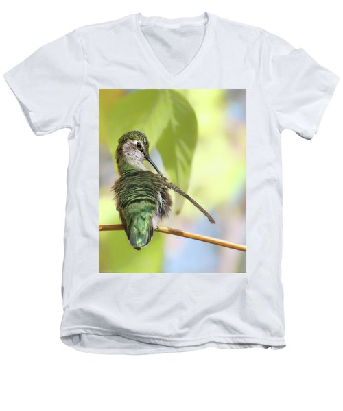 Anna's Hummingbird - Preening Men's V-Neck T-Shirt