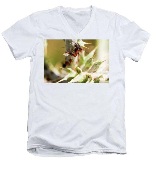 Ant Farming Men's V-Neck T-Shirt