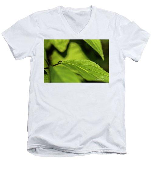 Ant Life Men's V-Neck T-Shirt