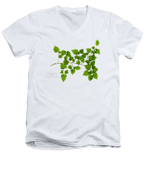 Hawthorn Men's V-Neck T-Shirt by Christina Rollo