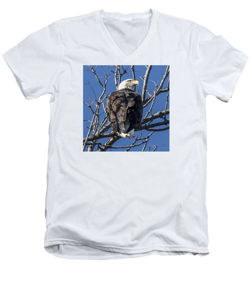 Bald Eagle Perched Men's V-Neck T-Shirt